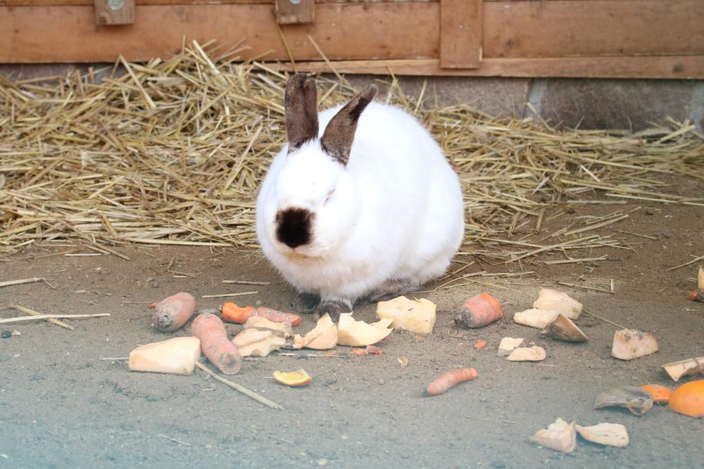 Karnickel, Hase, Kaninchen - Hasenhaltung