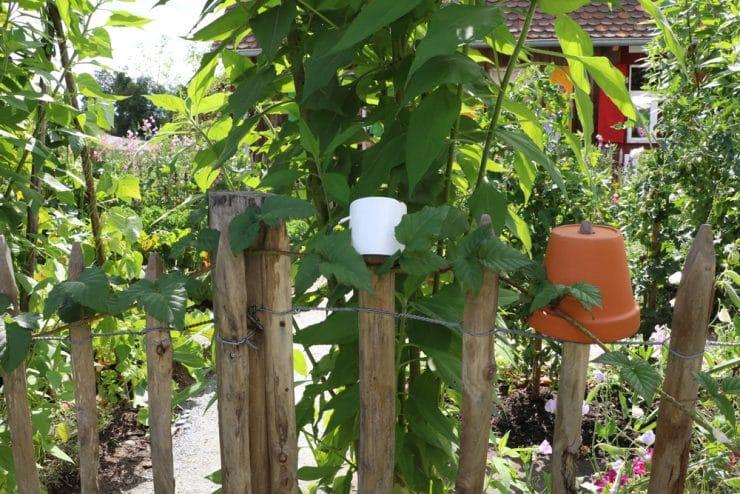 Zaun Bauerngarten Selbstversorger