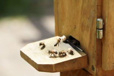 Bienenhaltung - Bienenstock