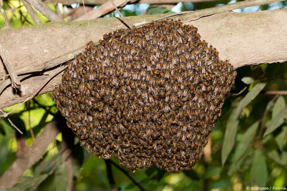 Bienen im Winter - Bienentraube