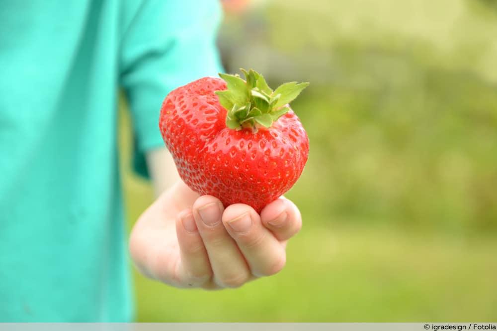 Sweet Mary XXL Erdbeeren