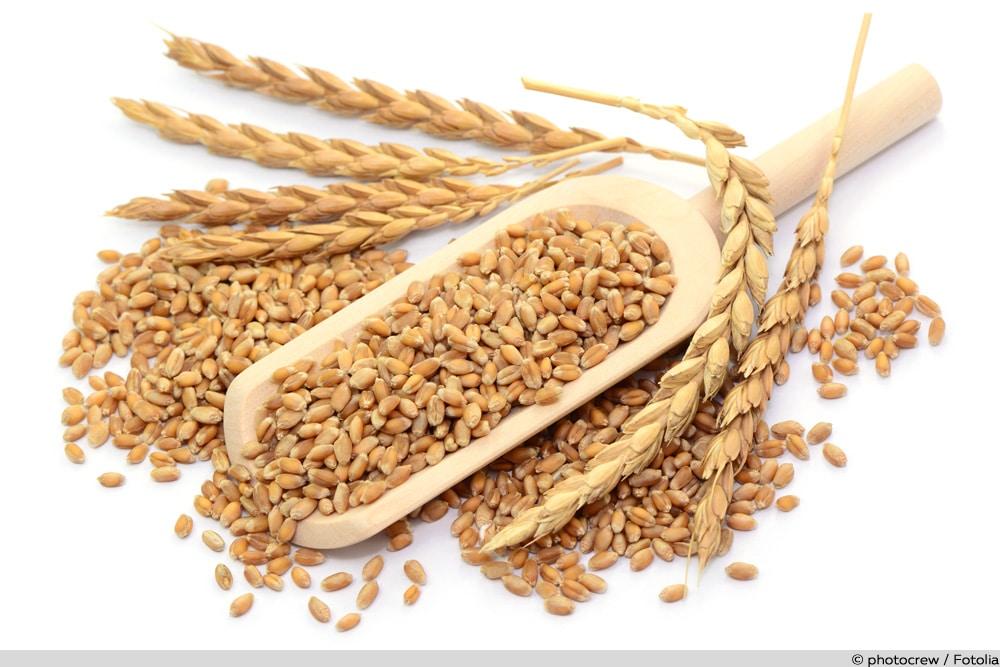 Getreidearten - Weizen