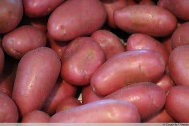 rote Kartoffeln Laura