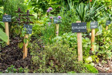 Kräuter im Garten