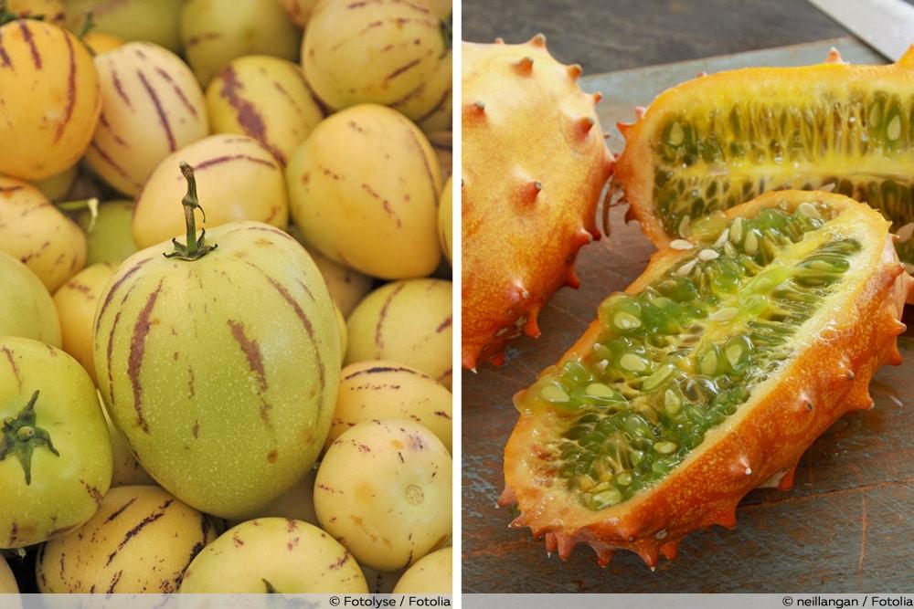 Melonenarten