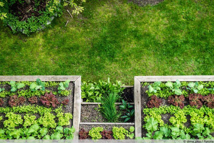 Salatsorten Salatarten
