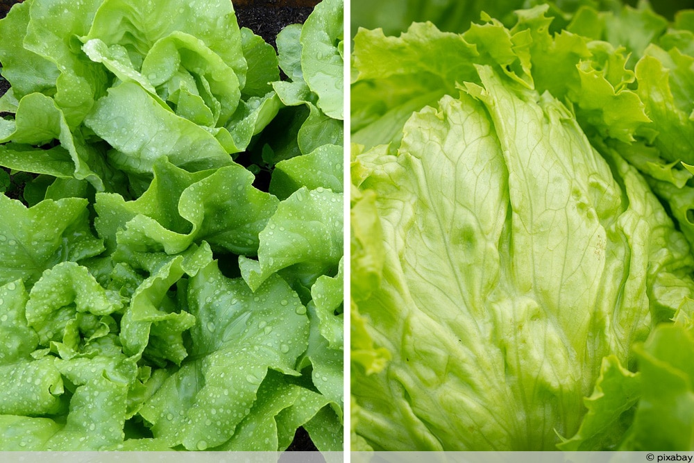 bitterer salat