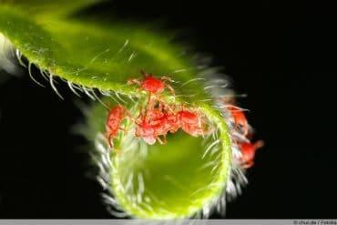 Spinnmilben - kleine rote Spinnen