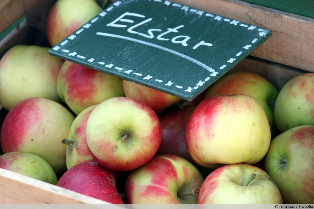 Apfelsorten Elstar