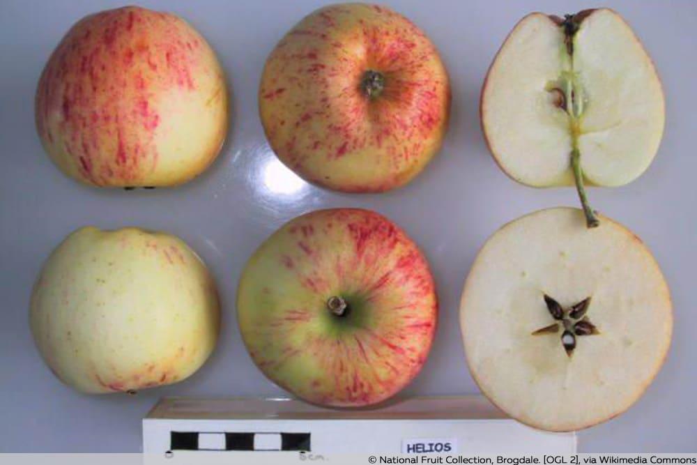 Apfelsorte Helios