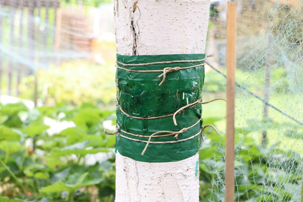 Baumschnitt Wundverschluss