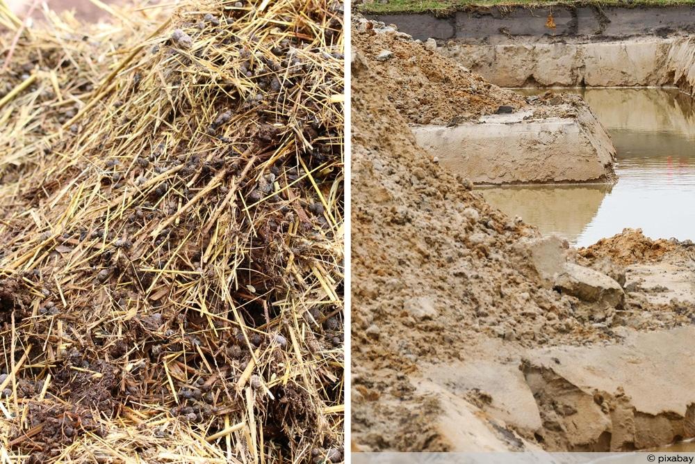 Baumschnitt versiegeln Lehm und Kuhmist