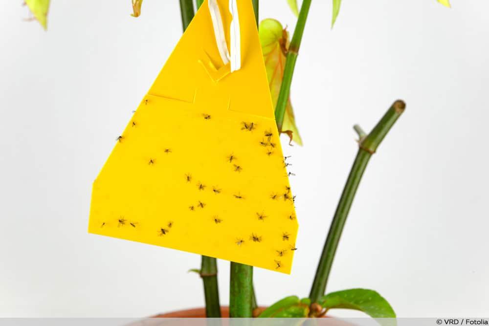 Gelbtafeln
