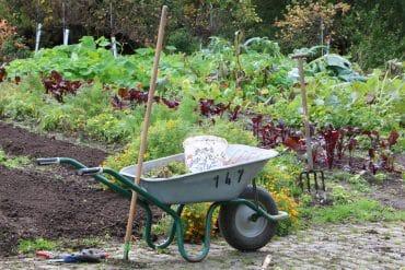 Garten Mischkultur