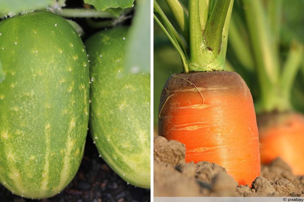 Gemüse Mischkultur