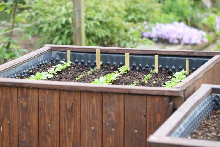 Atemberaubend Starkzehrer: 9 stark zehrende Pflanzen | 31 Gemüse im Hochbeet @BE_97