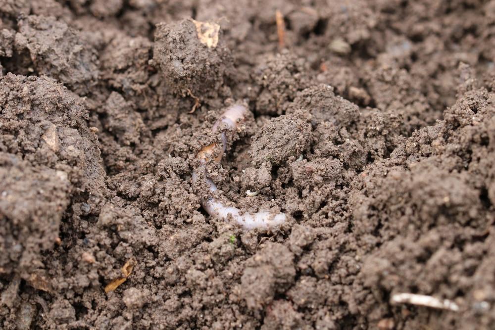 Bodenqualität
