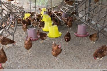 Hühnerstall einrichten