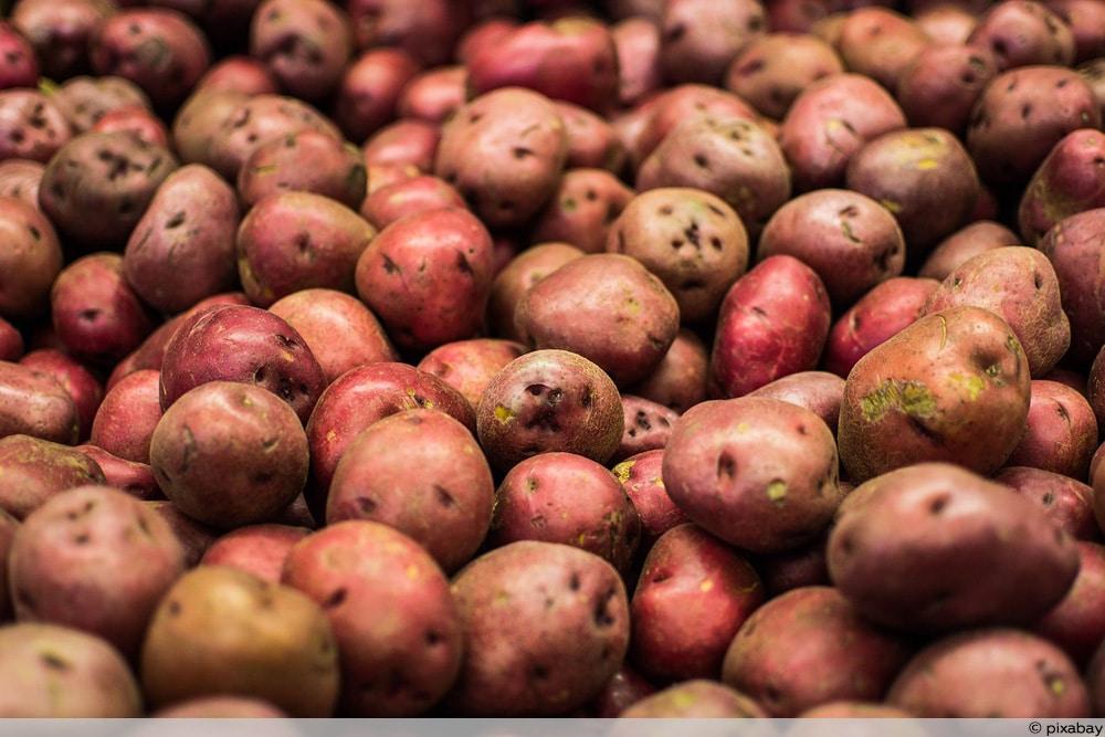 Kanarische Peluca rote Kartoffeln
