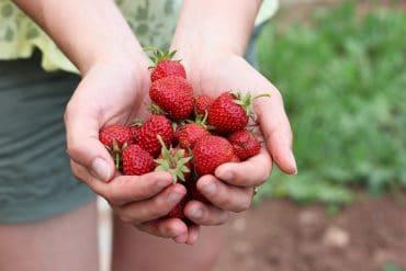Erdbeeren einfrieren