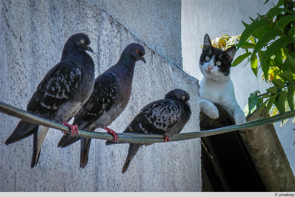 Katze gegen Vogel