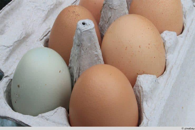 grünes Ei