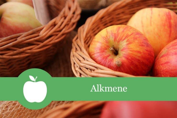 Apfelsorten Alkmene