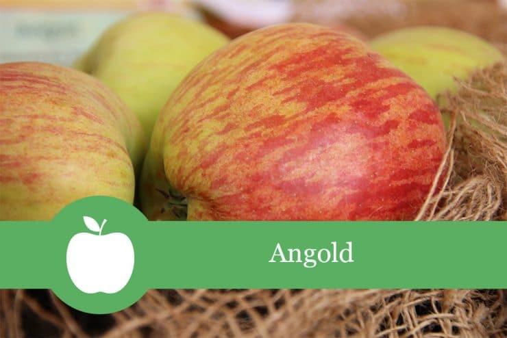 Apfelsorten Angold