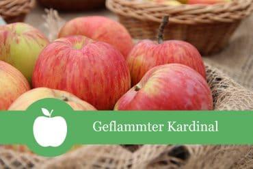 Apfelsorten Geflammter Kardinal