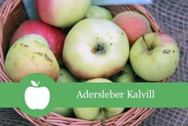 Adersleber Kalvill