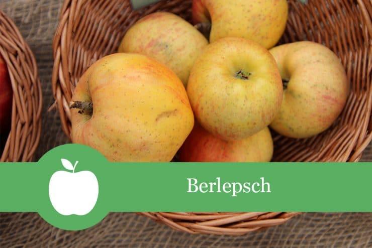 Apfelsorten Berlepsch