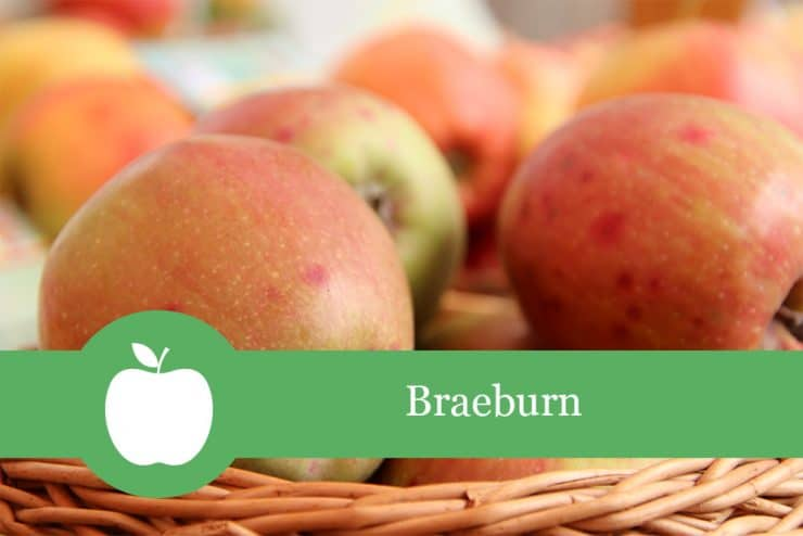 Braeburn - Apfelsorte