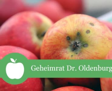 Geheimrat Oldenburg