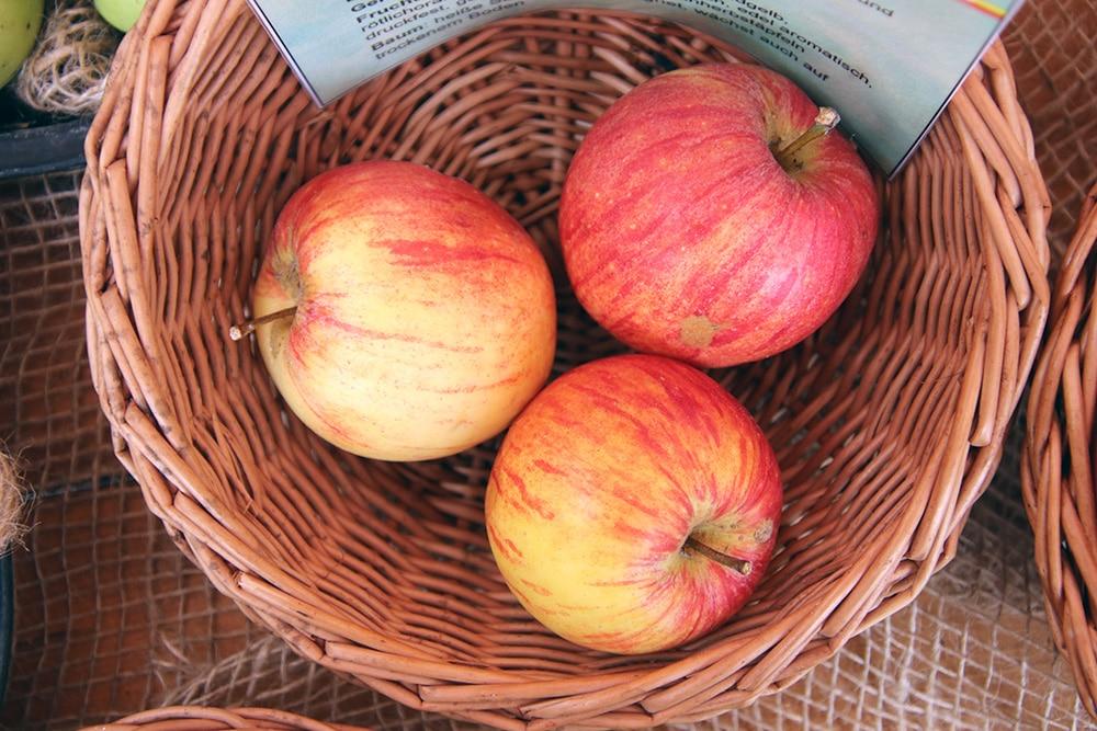 Alkmene - Apfelsorte