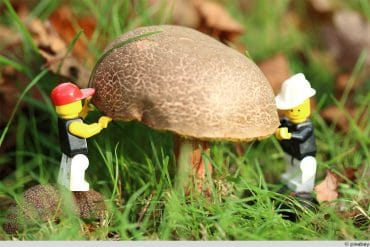 Pilze anbauen