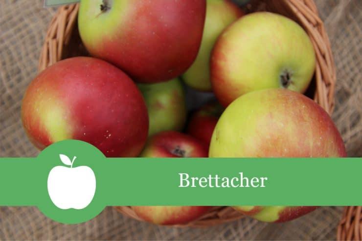 Brettacher