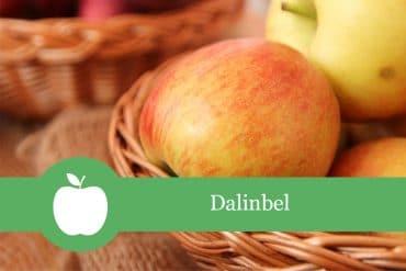 Dalinbel