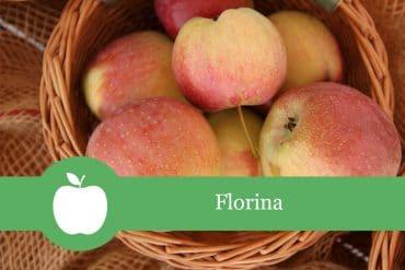 Florina - Apfelsorte