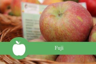 Fuji - Apfelsorte