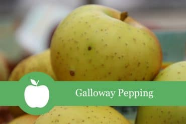 Galloway Pepping