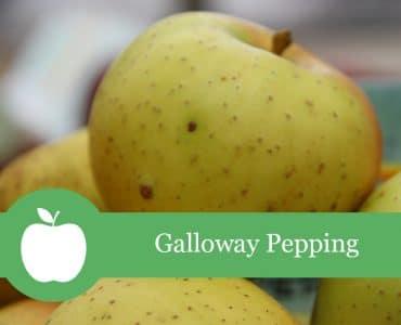 Galloway Pepping