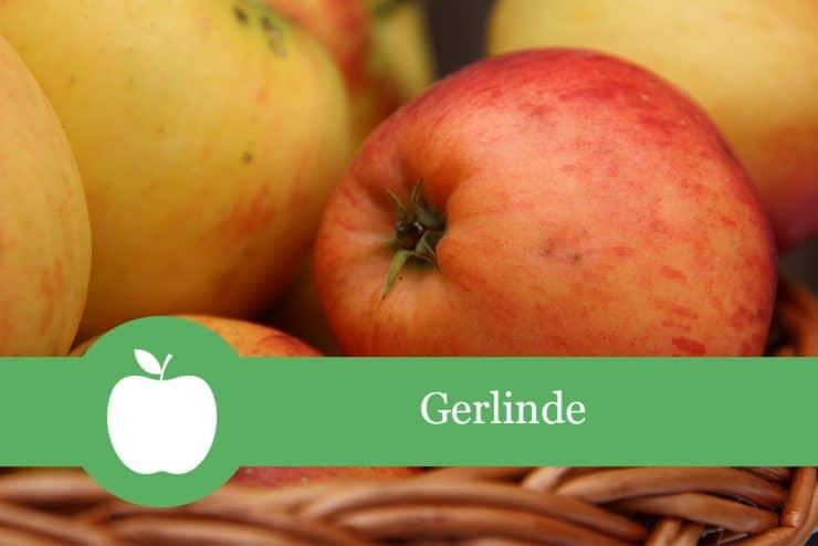Gerlinde
