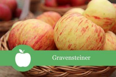 Gravensteiner