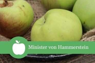 Hammerstein