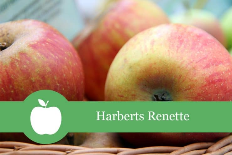 Harberts Renette
