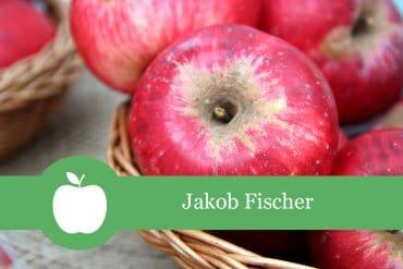 Jakob Fischer