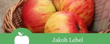 Jakob Lebel