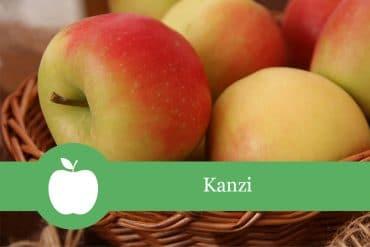 Kanzi - Apfelsorte