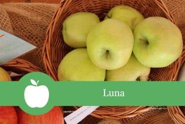 Luna - Apfelsorte