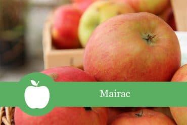 Mairac